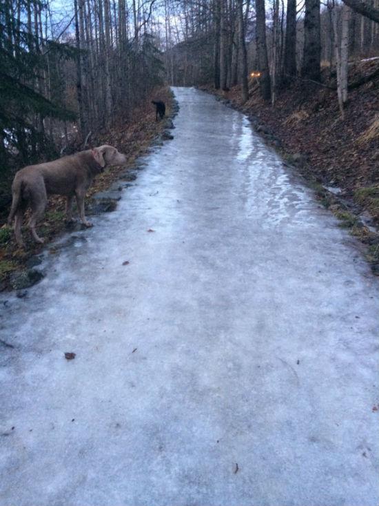 Eagle River Nature Center Trail