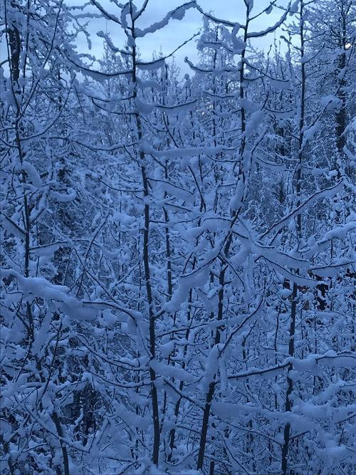 Snowing in Alaska